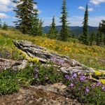 """Wildflowers on Grandmother Mountain • <a style=""""font-size:0.8em;"""" href=""""http://www.flickr.com/photos/56452031@N00/50078721258/"""" target=""""_blank"""">View on Flickr</a>"""