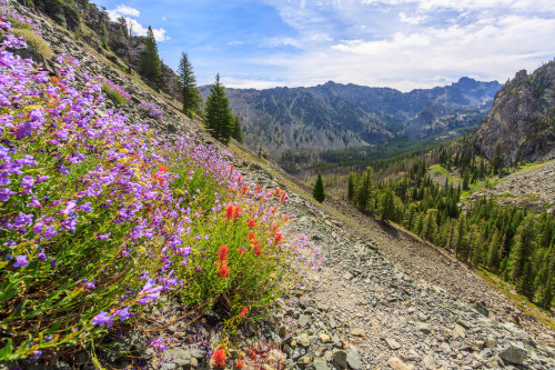 Wildflowers grow on the talus slopes.