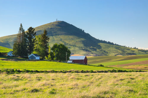Steptoe Butte rises behind a Palouse farm.