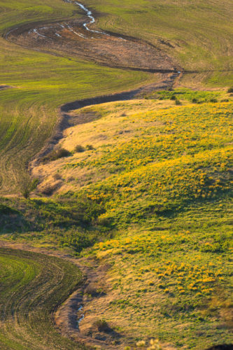 There's not much native prairie left on the Palouse.