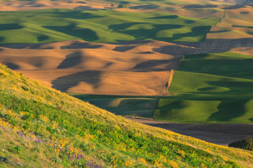 Contrasts and patterns of the Palouse.