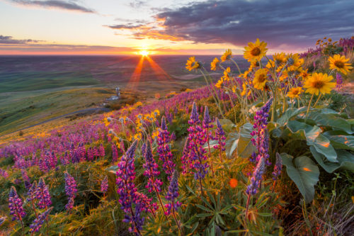 Sunset from the lupine field on Steptoe Butte.