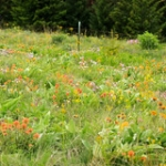 "Wildflowers at Waha • <a style=""font-size:0.8em;"" href=""http://www.flickr.com/photos/56452031@N00/42569135391/"" target=""_blank"">View on Flickr</a>"