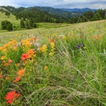 "Wildflowers at Waha • <a style=""font-size:0.8em;"" href=""http://www.flickr.com/photos/56452031@N00/42299483582/"" target=""_blank"">View on Flickr</a>"
