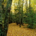 """The Southern Maine Coastal Forest • <a style=""""font-size:0.8em;"""" href=""""http://www.flickr.com/photos/56452031@N00/1836113589/"""" target=""""_blank"""">View on Flickr</a>"""