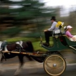 """Take a Carriage Ride • <a style=""""font-size:0.8em;"""" href=""""http://www.flickr.com/photos/56452031@N00/4143921307/"""" target=""""_blank"""">View on Flickr</a>"""
