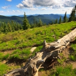 """The Sub-alpine Meadow • <a style=""""font-size:0.8em;"""" href=""""http://www.flickr.com/photos/56452031@N00/5991111292/"""" target=""""_blank"""">View on Flickr</a>"""